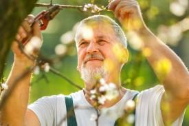 Älterer Mann mit brauner Haut beim Verschneiden eines Baums