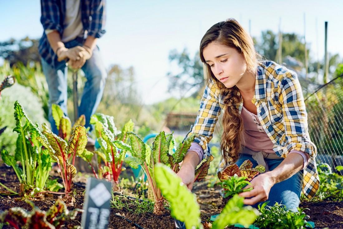 Eine etwa 20-jährige Frau kniet in ihrem Garten am Mangold-Beet und untersucht die Pflanzen.