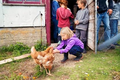 Kind füttert Huhn und ist umgeben von weiteren Kindern auf einem Bauernhof